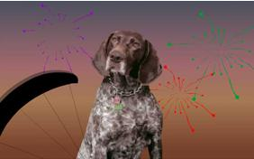 Just Dropping In: Happy New Year Edition ecard with dogs