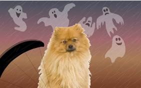 Happy Hooowloween ecard with dogs