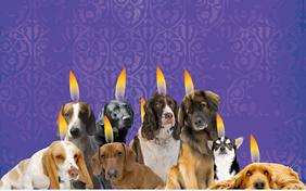 Best Wishes For Hanukkah ecard with dogs