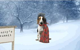 Merry Christmas: Upload Your Photo ecard with dogs