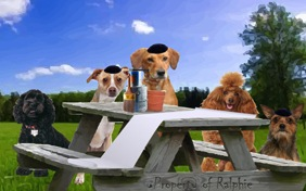 A Passover Message dog ecard