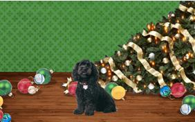 Naughty or Nice dog Christmas ecard