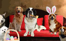 Easter Wishes ecard with dogs