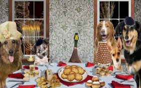 A Family Hanukkah pet ecard