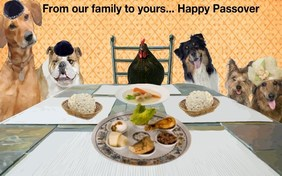 Happy Passover pet ecard