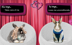 Is It Love pet ecard
