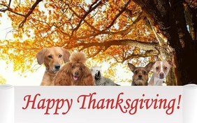 A Thanksgiving Message pet ecard