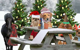 A Christmas Message pet ecard