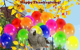 Thanksgiving Parade pet ecard