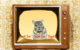 Thank You Four Ways photo upload pet ecard