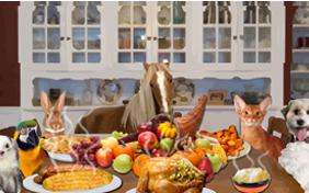 Thanksgiving Dinner pet ecard