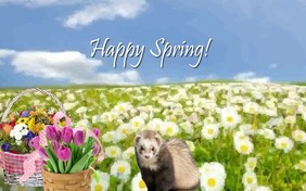 Happy Spring pet ecard