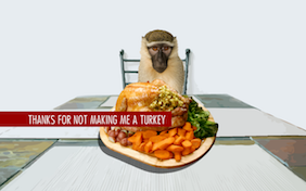 Thanksgiving Turkey pet ecard