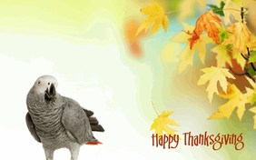 Being Thankful pet ecard