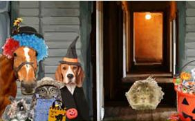 Trick or Treat Halloween pet ecard