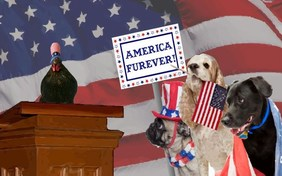 America Furever July Fourth pet ecard