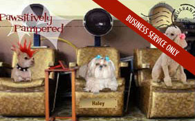 Pawsitively pampered grooming e-postcard for pet groomers
