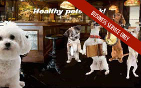 Healthy Pets Rock e-postcard for pet businesses