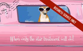 Star Treatment pet e-postcard for pet businesses