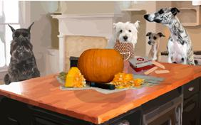Pumpkin Carving Lesson Halloween dog ecard