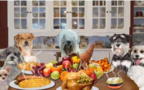 Thanksgiving Dinner dog ecard
