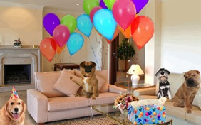 Surprise Party dog ecard