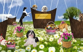 Happy Spring dog ecard