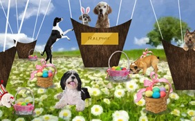 A Wonderful Easter dog ecard