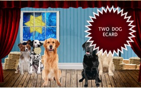 Matzo Love Passover two dog ecard