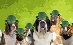 St Patrick's Day ecard with dogs