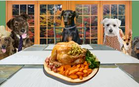 Family Thanksgiving ecard with dogs