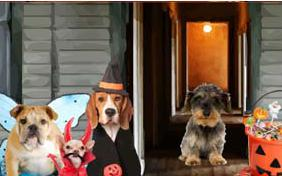 Trick or Treat Halloween dog ecard