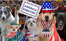 America Furever July Fourth dog ecard