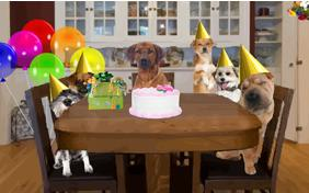 Birthday Celebration Dog Ecard