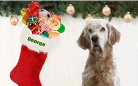 A Magical Christmas dog ecard