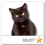 Black Short Hair Cat for cat ecards