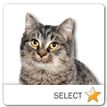 Black Tabby Cat for cat ecards