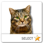 Brown Tabby Cat for cat ecards