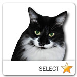 Black and White Medium Hair Cat for cat ecards