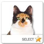 Calico Cat for cat ecards