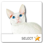 Cornish Rex Cat for cat ecards