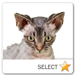 Devon Rex Cat for cat ecards