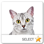 Egyptian Mau Cat for cat ecards
