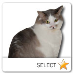 Grey and White Long Hair Cat for cat ecards