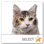 Kurilian Bobtail Cat for cat ecards
