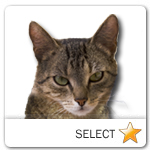 Brown Mackarel Tabby Cat for cat ecards