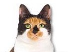 Calico Cat for dog ecards