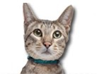 Savannah Cat for dog ecards