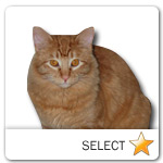 Orange Tabby Cat for cat ecards