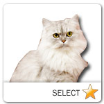 Persian Cat for cat ecards